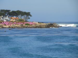 Pacific Grove view.
